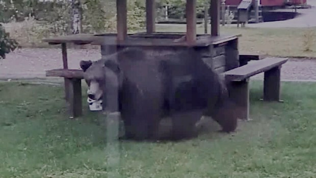 """Björnen besökte huset i Laforsen igen och igen: """"Benen darrade"""""""