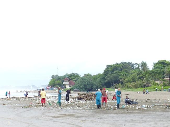 Arbetare och traktorer kör i skytteltrafik för att städa upp stränderna på Bali.