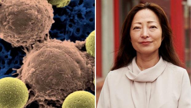 Forskaren förklarar: Det här är T-celler