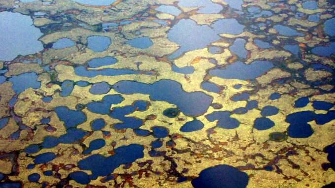 Permafrosten tinar på den sibiriska tundran. Foto: KAREN FREY / AP / UNIVERSITY OF ALASKA, FAIRBANKS