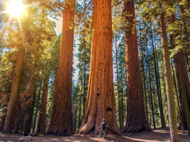 Sequoia National Park, Kalifornien.