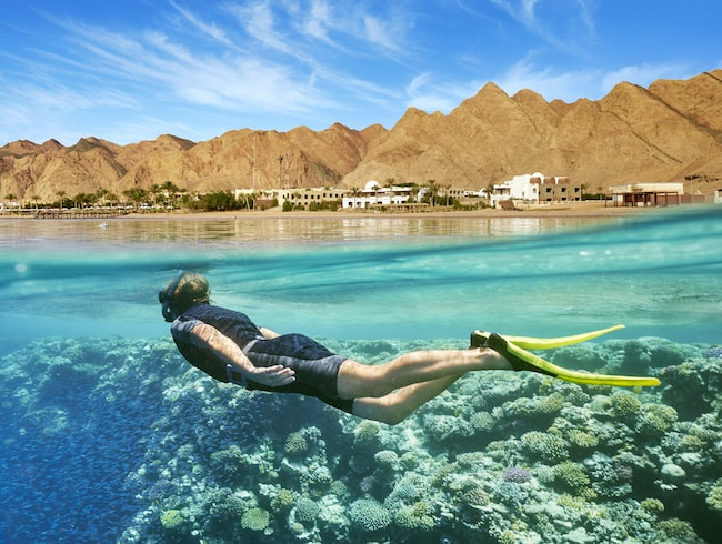 Röda havet är ett dyk- och snorkelparadis.