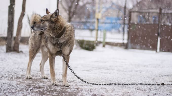 Hon uppmanar nu alla att tänka efter i vinter innan hund kopplas fast utanför affären. Foto: Colourbox