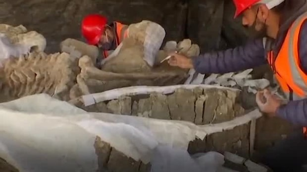 Fyndet: 100 mammutar      under nya flygplatsen
