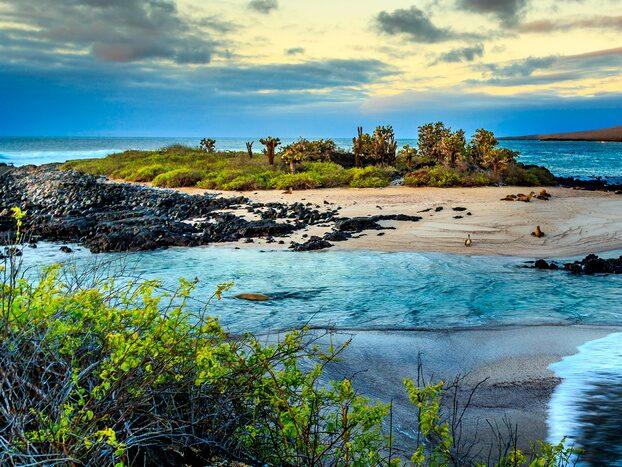 Drömmer du om en resa till Galapagos-öarna? Det unika resmålet är ett av åtta som det rekommenderas att man inte besöker i år.