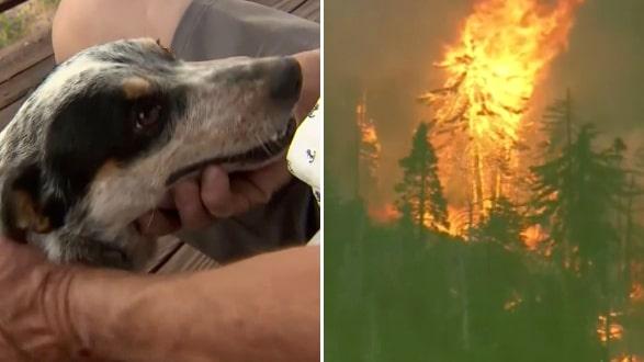 Hunden räddad ur skogsbranden efter tre dagar – återförenas med husse