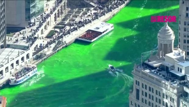 Chicagofloden färgas grön inför St. Patrick's Day