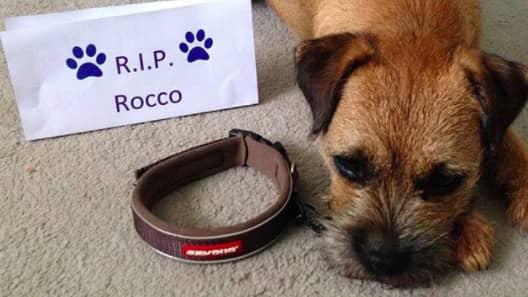 Nu hyllas Rocco och James genom hashtaggen #CollarsOffForRocco. Foto: Skärmdump/Instagram