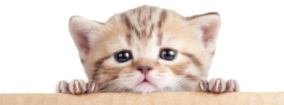 tolka kattens kroppsspråk