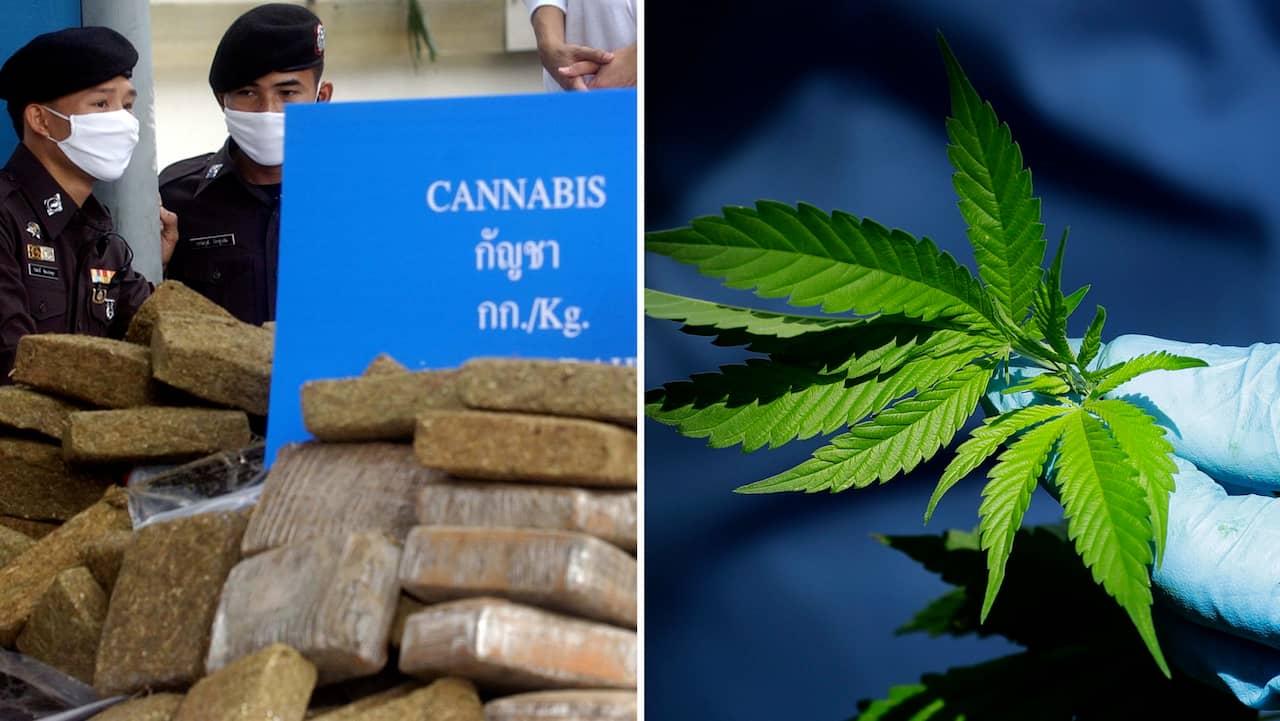 laglig cannabis