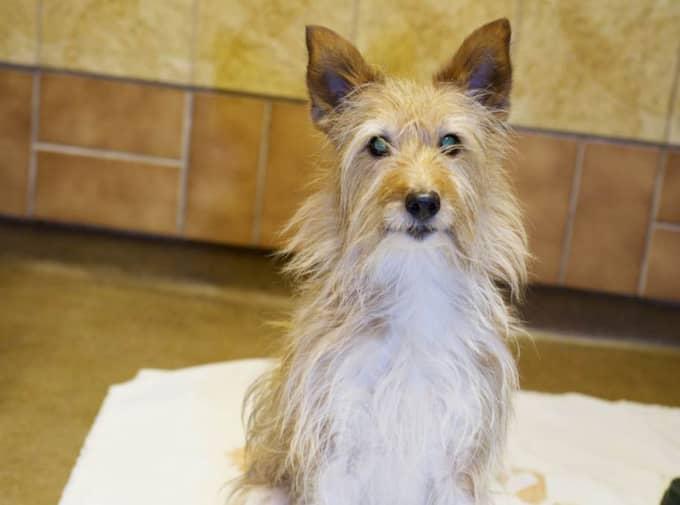 SÅ GÅR DU TILL VÄGA – STEG FÖR STEG: 1. Lägg ut handduk. Många hundar tycker att det halkiga underlaget i badkar eller duschrum är obehagligt, det gör att de blir onödigt uppskrämda. Använd därför ett halkskydd eller lägg ett badlakan på badkarets/duschens botten. Klicka vidare! Foto: Theresia Köhlin
