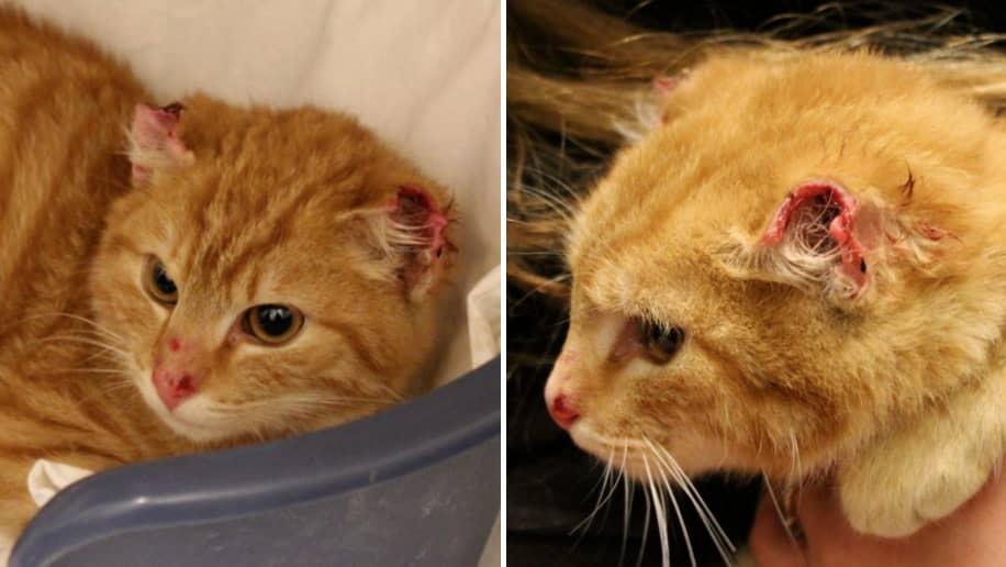 Man mordade katt doms for djurplageri