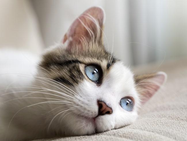 Katterna får lov att vara inomhus enligt de nya förslaget.
