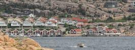 Nya dolda klimathotet  gömmer sig i sjögräset