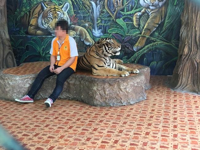 Djurrättsorganisationen kontaktar resenärer i Thailand och uppmanar dem att bojkotta djurattraktioner.