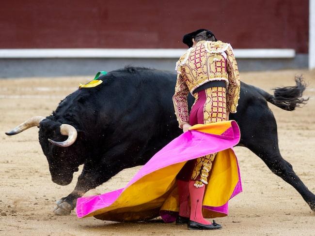 Tjurfäktning förekommer fortfarande på olika platser i Spanien, även om motståndet har växt.