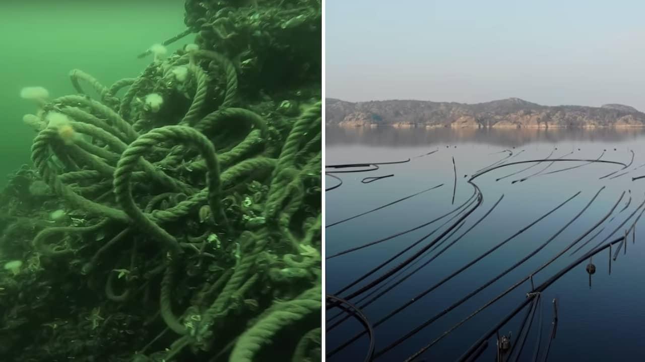 Musselodlares skräp avslöjas – av smygtagna havsfilmen