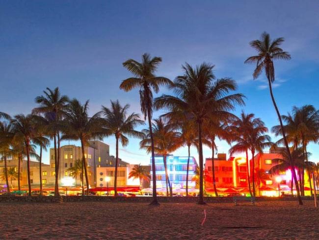 Längs stranden i Miami Beach vajar palmerna i ljuset av neonskyltarna.