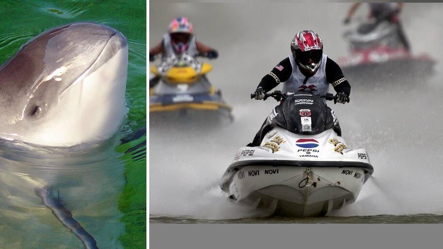 SM-veckan i Helsingborg äger rum den 2-8 juli. Men racerbåtstävlingarna