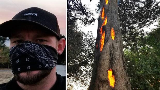 """Chockerande upptäckten i trädet: """"Aldrig sett något liknande"""""""