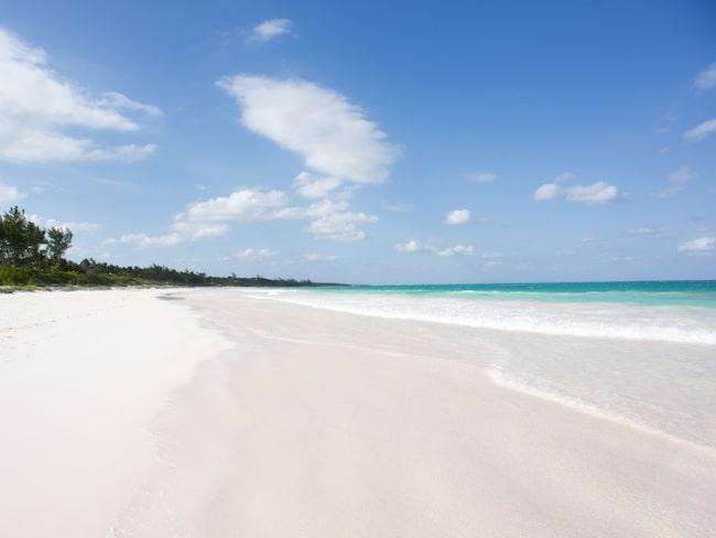 På Bahamas är det lätt att stöta på hajar.