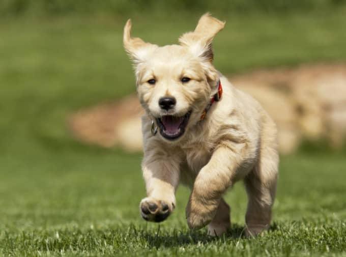 2. Hund – tför dig som vill ha en trofast vän. Foto: Petr Sterba