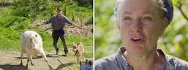 Dramat på Mandelmanns gård  – efter missen med djuren