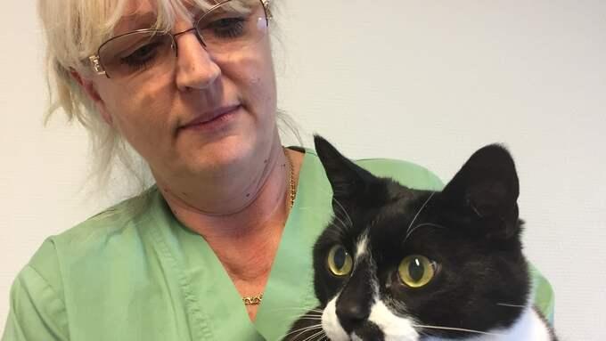 Anette Nelhage är djursjukvårdare och kostrådgivare för hund och katt på Göteborgs djurklinik. Foto: Göteborgs djurklinik