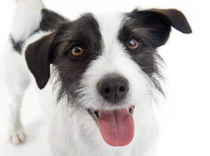 Har du ingen hund? Då kan du låna en på sportlovet. Foto: Colourbox