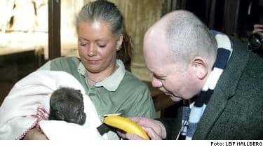 Expressens reporter Ingvar Hedlund (till höger) bjuder lilla Enzo på banan.