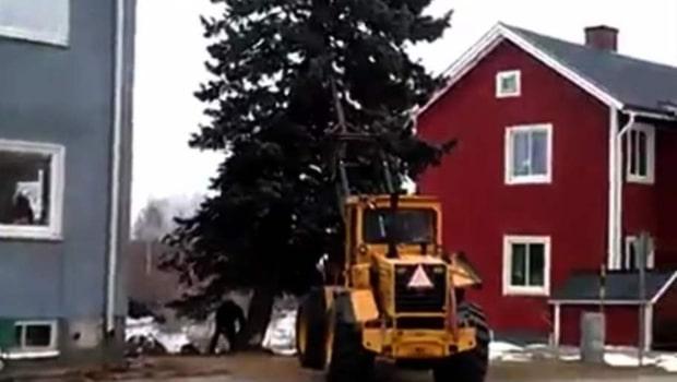 Här är trädfällningen som inte går som planerat