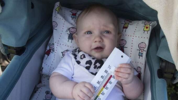 Sigrid, 5 månader, lånade ut sin vagn till GT för att testa hur varmt det kan bli om man lägger en filt över öppningen. Hon själv höll sig i skuggan under tiden. Foto: Per Wissing