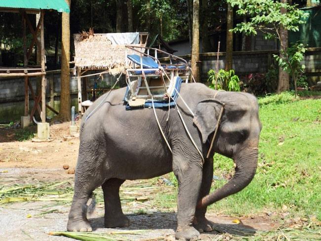 <span>Orsaken är att djuren ofta utsätts för lidande under den hårda träningen. </span>