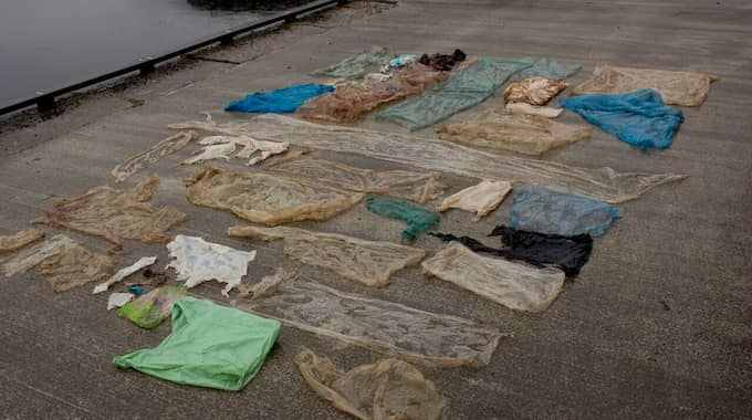 Inuti valen hittades 30 plastpåsar och en hel del annan småplast. Valen dog av sina skador. Foto: CHRISTOPH NOEVER/UNIVERSITY OF BERGEN