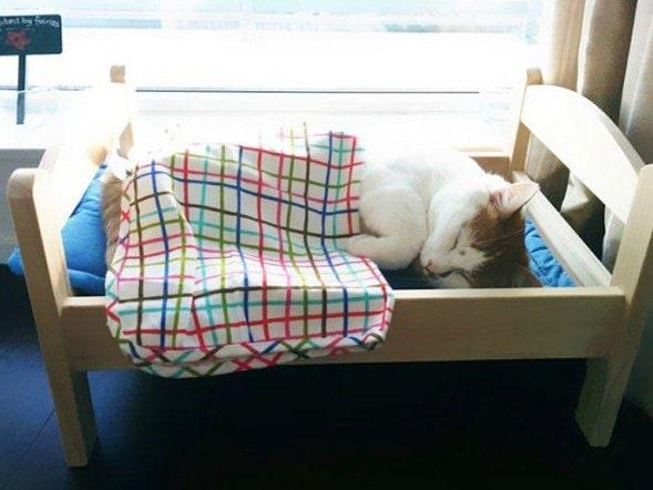 Så här skönt får kissarna nu sova på katthemmet.
