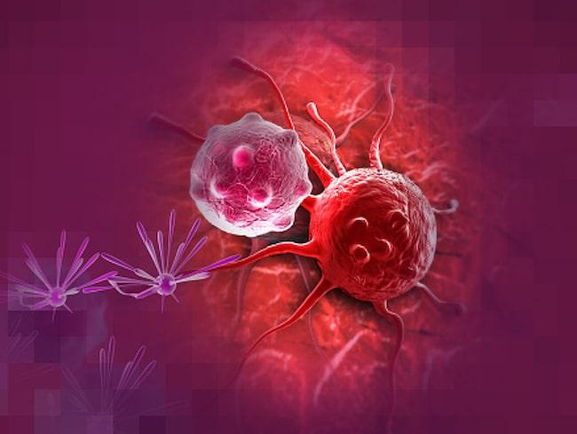 """""""Ju snabbare cancercellerna förökar sig, desto snabbare utrotas de"""", säger forskningschefen."""