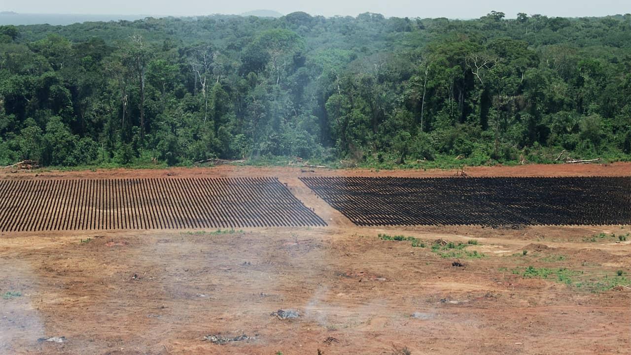 varför skövlas regnskogen