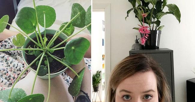 Har intresset för krukväxter positiv påverkan på ens psykiska hälsa? Hälsolivs reporter Cornelia Thomasson har 50 växter hemma. Hon är särskilt förtjust i sina elefantöron och i sin rosenskärm.