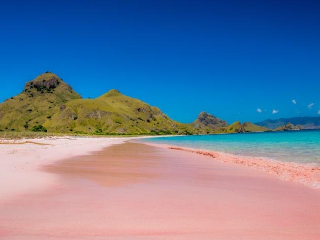 8f795aa2 Strand – här finns det rosa stränder | Allt om Resor