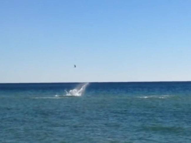 <span>Hajarna var inte långt ifrån srtandkanten där familjen badade.</span>