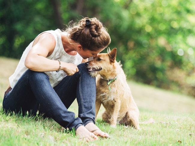 Enligt en ny studie har hundar en överraskande förmåga som hjälper oss människor att förstå vad de är ute efter.