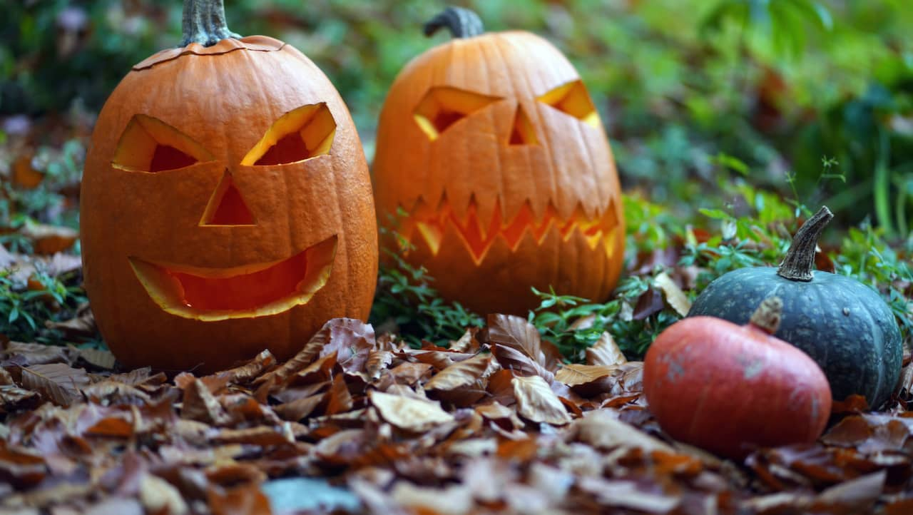 Karva en pumpa till halloween – så gör du en pumpalykta  94bbff86e52fd