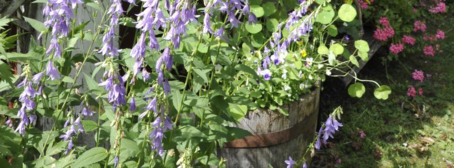 Se upp! Vackra växter kan bli monsterplantor Leva& bo Expressen Leva& bo