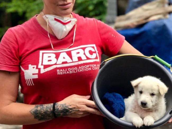 Räddningsteamet går nu in för att ge de övergivna djuren mat, vatten och veterinärhjälp.