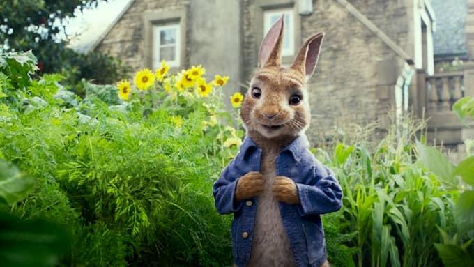 """Familjefilmen """"Pelle Kanin"""" kritiseras för att inte ta matallergier på allvar. Foto: Courtesy of Sony Pictures"""