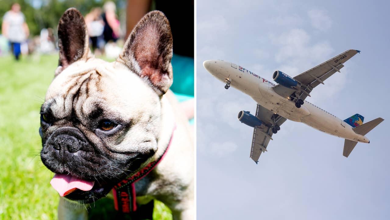 38 hundvalpar hittade döda på flygplan – smuggling misstänks