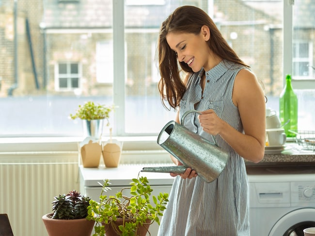 Växtrikets stora utbud gör att det även finns alternativ för de som inte har gröna fingrar.