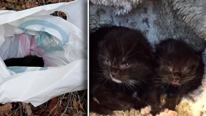 Irene Bjoröy Wiig är ansvarig på djurhemmet i norska Bergen som tog in kattungarna. Foto: Facebook