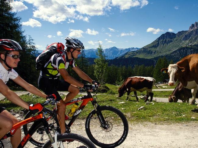 Det går lätt att hyra cyklar och ta sig runt i och utanför cykelstaden Salzburg, i de omgivande dalarna lockar alpvyer.