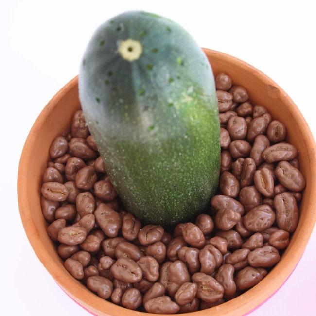 Fyll krukan med chokladbönor eller annat chokladgodis som kan föreställa jord.